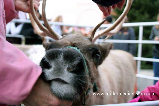 christmasintheville parade 2013 19 reindeer